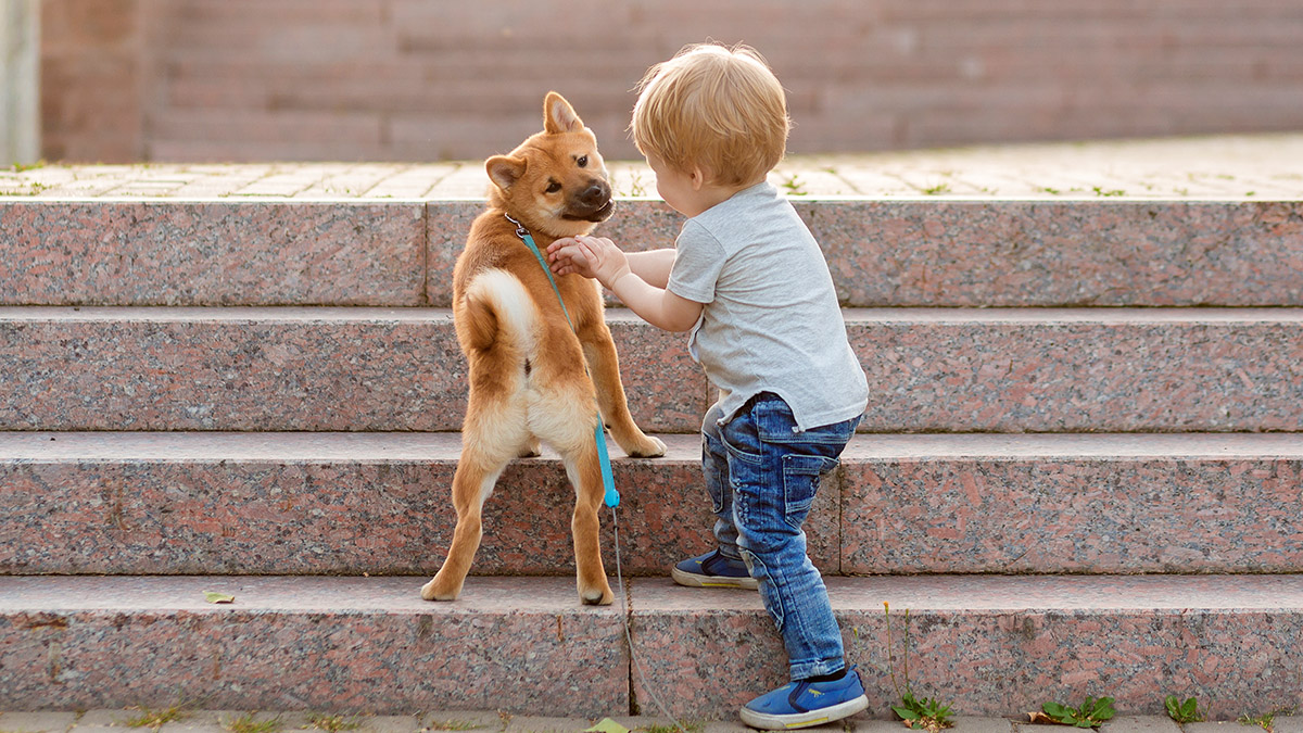 shiba inu puppy and a child on stairs