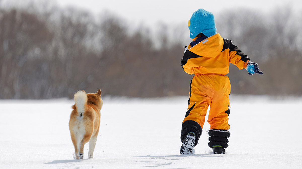 shiba inu puppy and a child in the snow